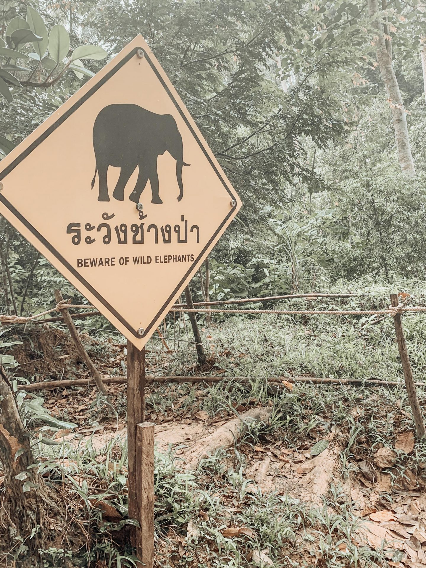 Beware of Wild Elephants signpost in the Khao Sok rainforest